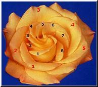 fibonacci numbers and spirals in plants
