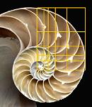 Golden ratio in Nautilus shell