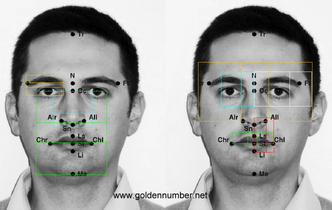 Meisner Beauty Guide for Golden Ratio Facial Analysis