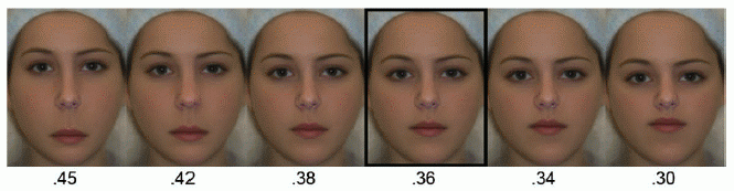 Facial features 5 elements of attractiveness