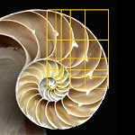 Is the Nautilus shell spiral a golden spiral?