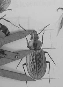 steve-silver-insect-large-golden-ratio