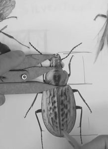 steve-silver-insect-golden-ratio